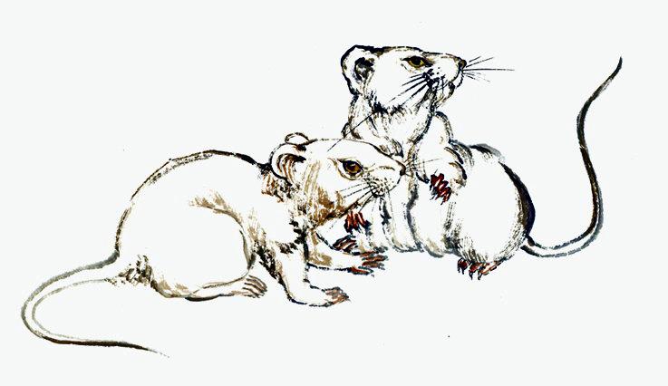 Ramalan Shio Tikus Hari Ini.jpg